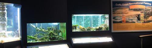 Find out more about local fish and other sea creates at the Coffs Aquarium
