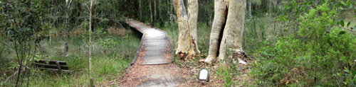 The Coffs Creek Walk is a real bush walk right in the middle of Coffs