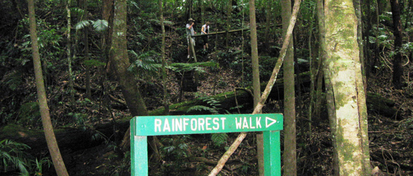 Rainforest walks in Bruxner Park close to Coffs Harbour