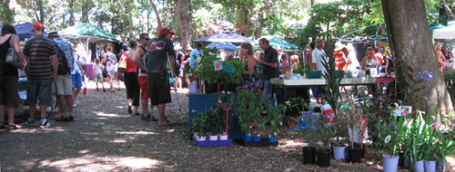 Bellingen Markets - 250 stalls under the trees