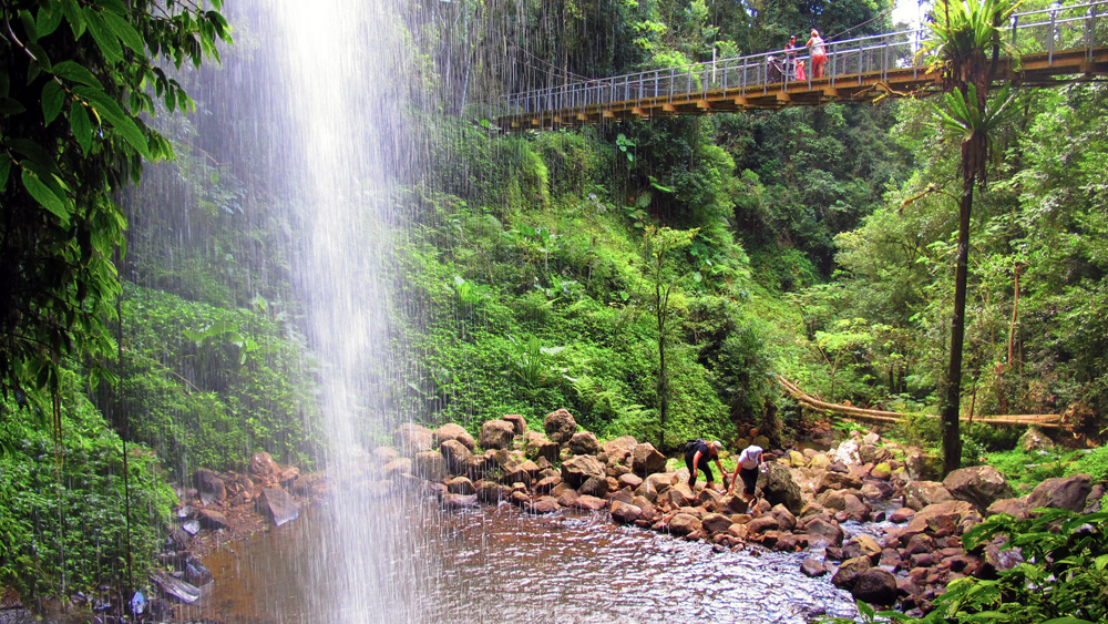 Crystal Shower Falls and suspension bridge in Dorrigo National Park Northern NSW